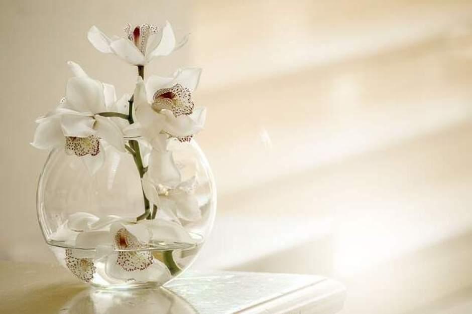 Orchidea coltivato secondo il metodo idroponico