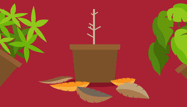 Foglia gialla piante: ecco che cosa significa
