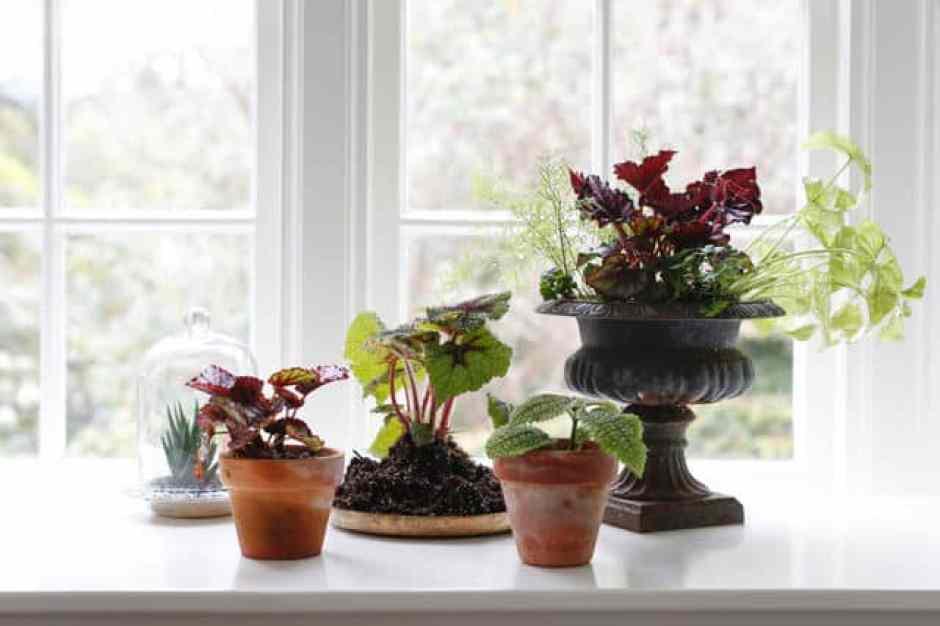 Composizione di piante all'interno di vasi alternativi