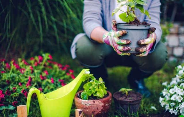vasi da giardinaggio: tutto quello che c'è da sapere