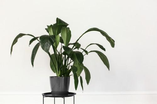 piedistalli fai da te per le piante