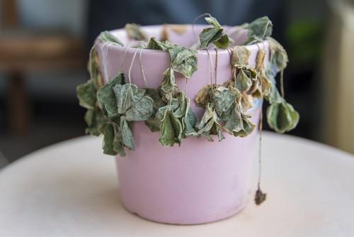 Nove tipi di piante a prova di pollice nero