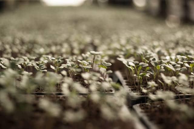 Il raccolto del mese di gennaio: cosa gustare nel primo mese dell'anno