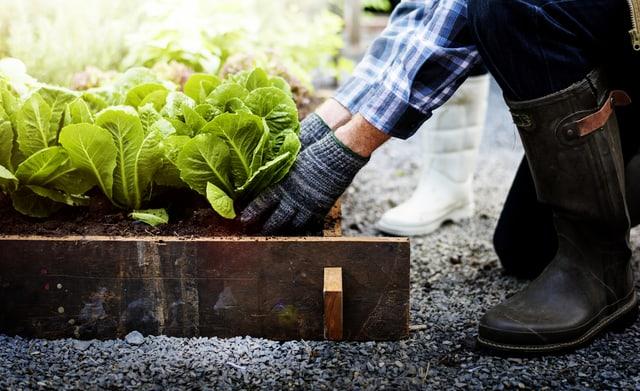 Tutti i segreti dell'orto: dalla semina all'irrigazione