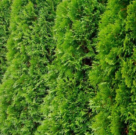 Privacy: le piante per delimitare il giardino