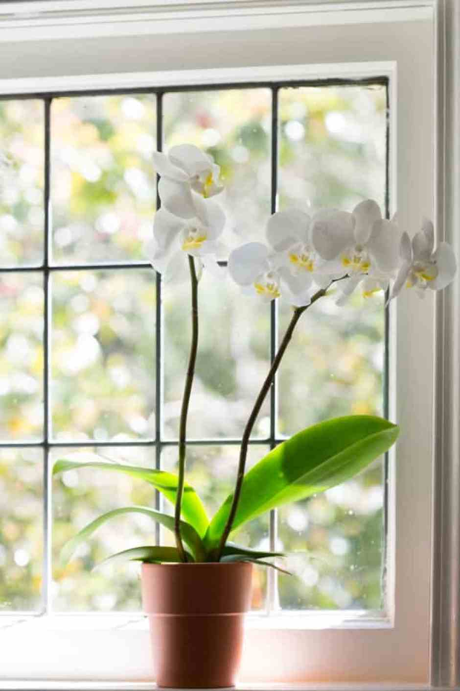 Un'orchidea dopo il rinvaso, procedimento molto importante per il benessere della pianta.