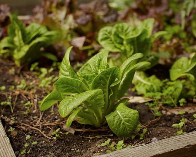 Coltivare l'orto senza spendere soldi