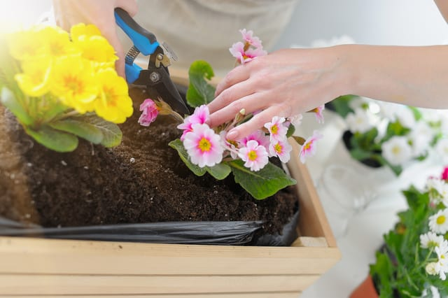 Una fioriera in legno, un contenitore semplice e pratico per coltivare fiori sia in giardino che sul balcone di casa.