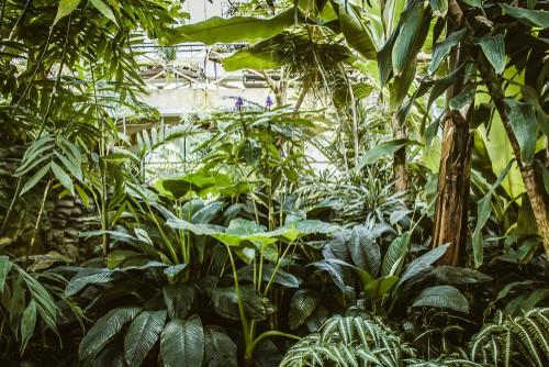 serra fai da te per il giardino fai da te con tante piante lussureggianti