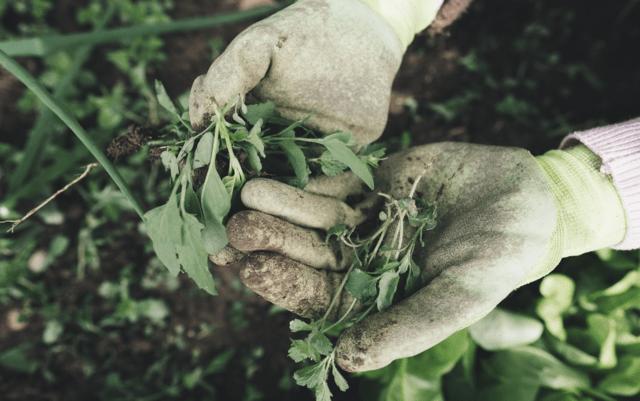 i guanti da giardinaggio proteggono dalle spine, da arrossamenti dovuti al contatto prolungato con le piante e proteggono la pelle dalle irritazioni