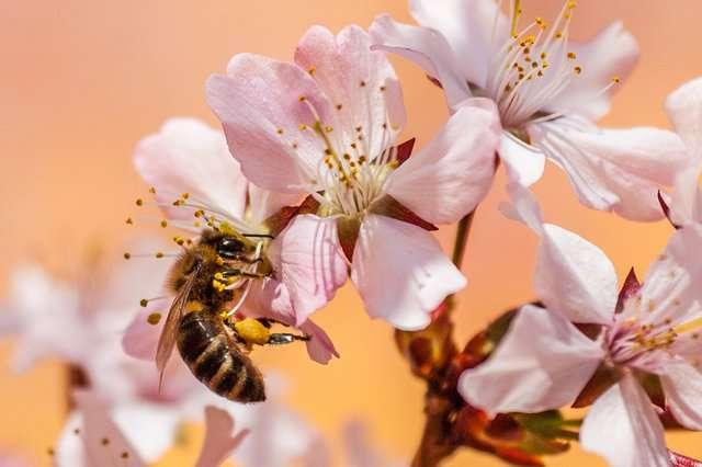 La riproduzione gamica, chiamata anche sessuale, delle piante avviene mediante la fecondazione della componente femmina del fiore (chiamato anche pistillo) da parte del polline che viene emesso dagli stami