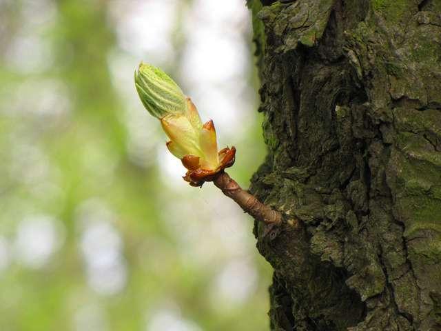 Moltiplicazione pianta a fusto legnoso