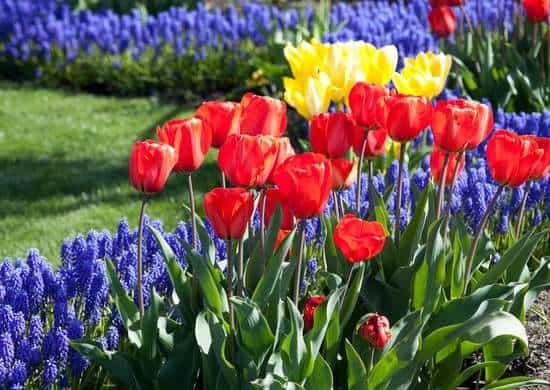 Bordure di fiori colorati, un modo perfetto per avere un giardino sempre allegro e vivace