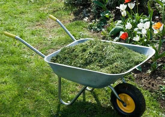 l'aggiunta di un sottile strato di erba tagliata al giardino impedisce la crescita di erbe infestanti e aiuta le piante a trattenere l'umidità