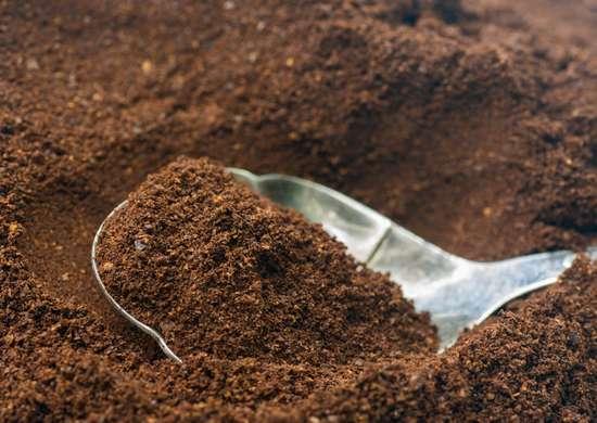 I fondi del caffè sono particolarmente efficaci come nutrienti vegetali, grazie al loro contenuto di calcio, di potassio, di azoto e di fosforo