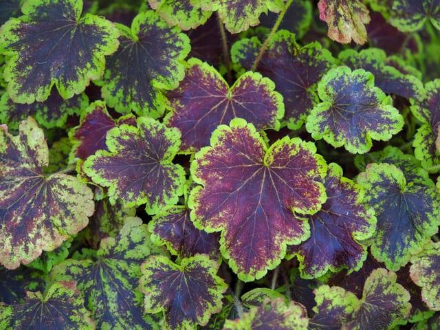 piante belle e originali per la primavera