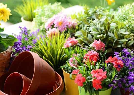 Vasi di terracotta e vasi colorati per le piante del giardino