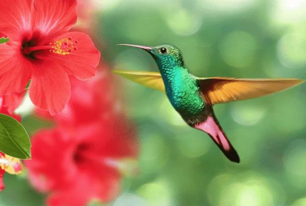 Ibisco: un fiore esotico dalle diverse varietà