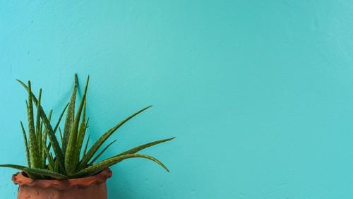 piante poca acqua