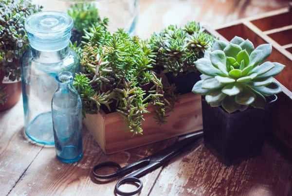 propagare le piante grasse