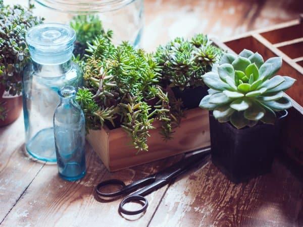 propagazione delle piante grasse