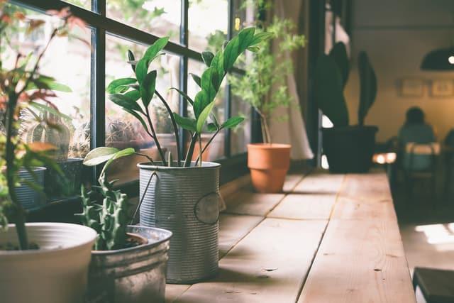 piante perfette per decorare la casa