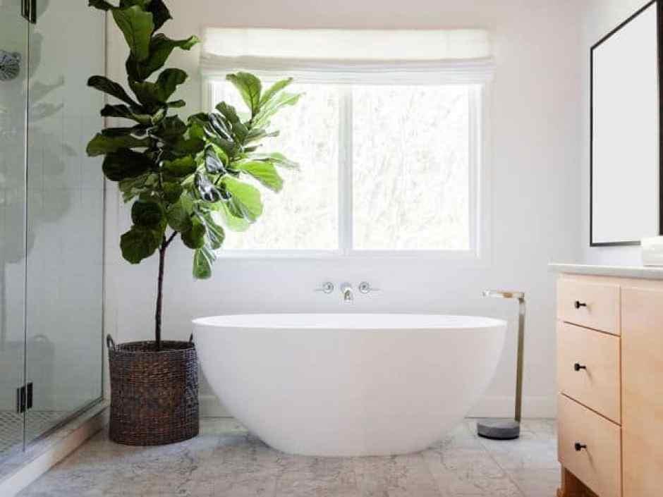pianta grande per decorare il bagno