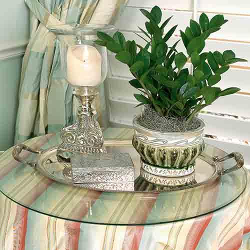 Zamioculcas zamiifolia, una pianta di interni che ha bisogno di poca luce