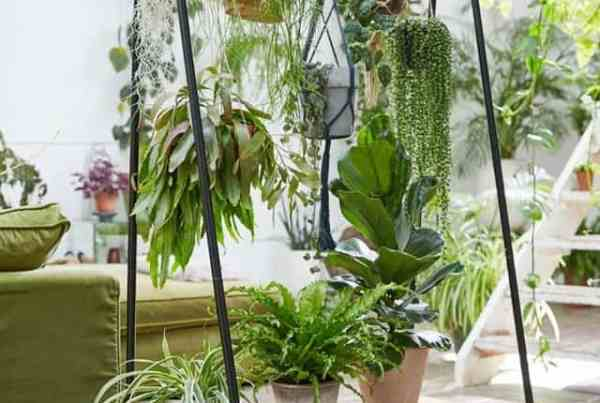 I problemi più comuni delle piante da appartamento