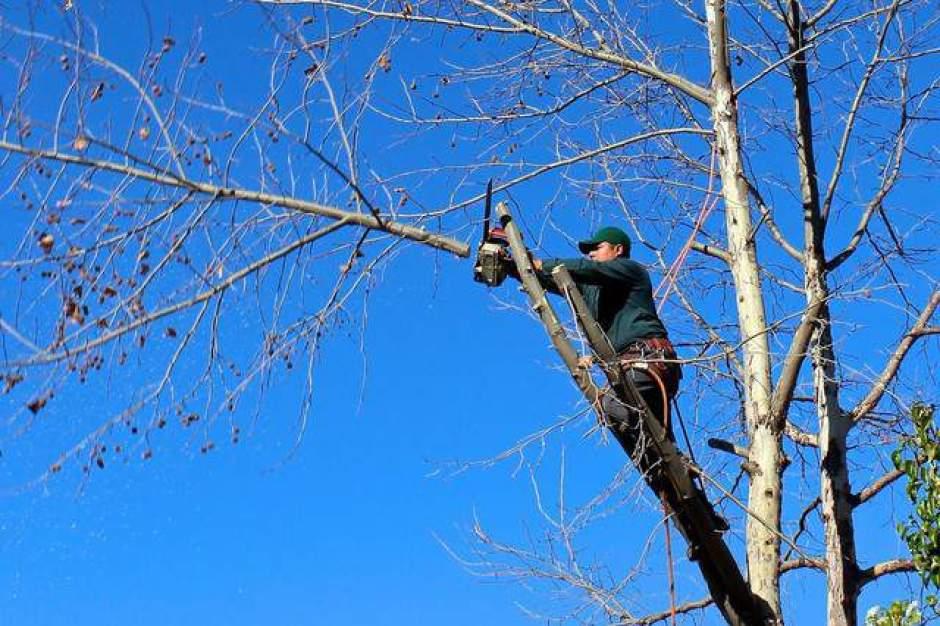 Potatura di un albero