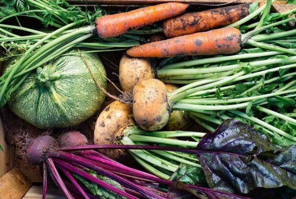 10 ortaggi facili da coltivare