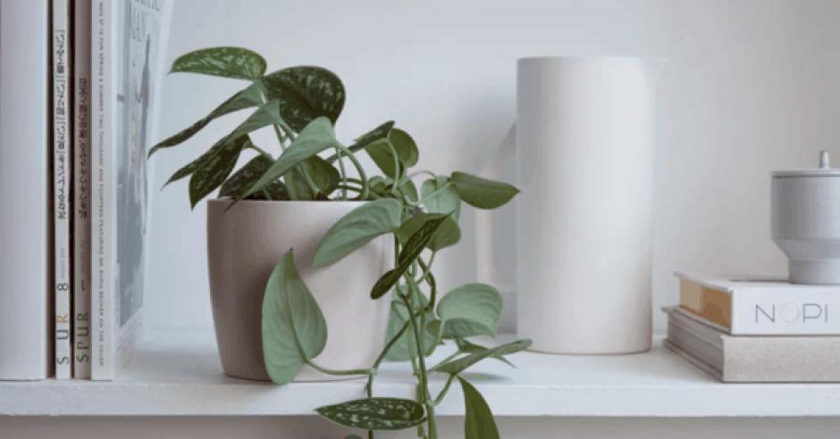 Potatura delle piante d'appartamento