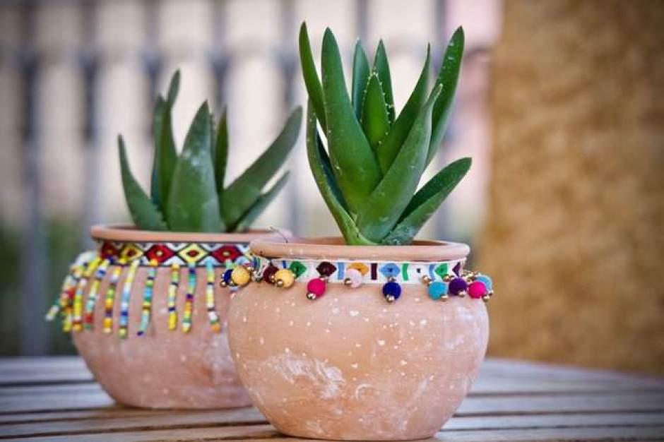 Vasi di terracotta per piante grasse