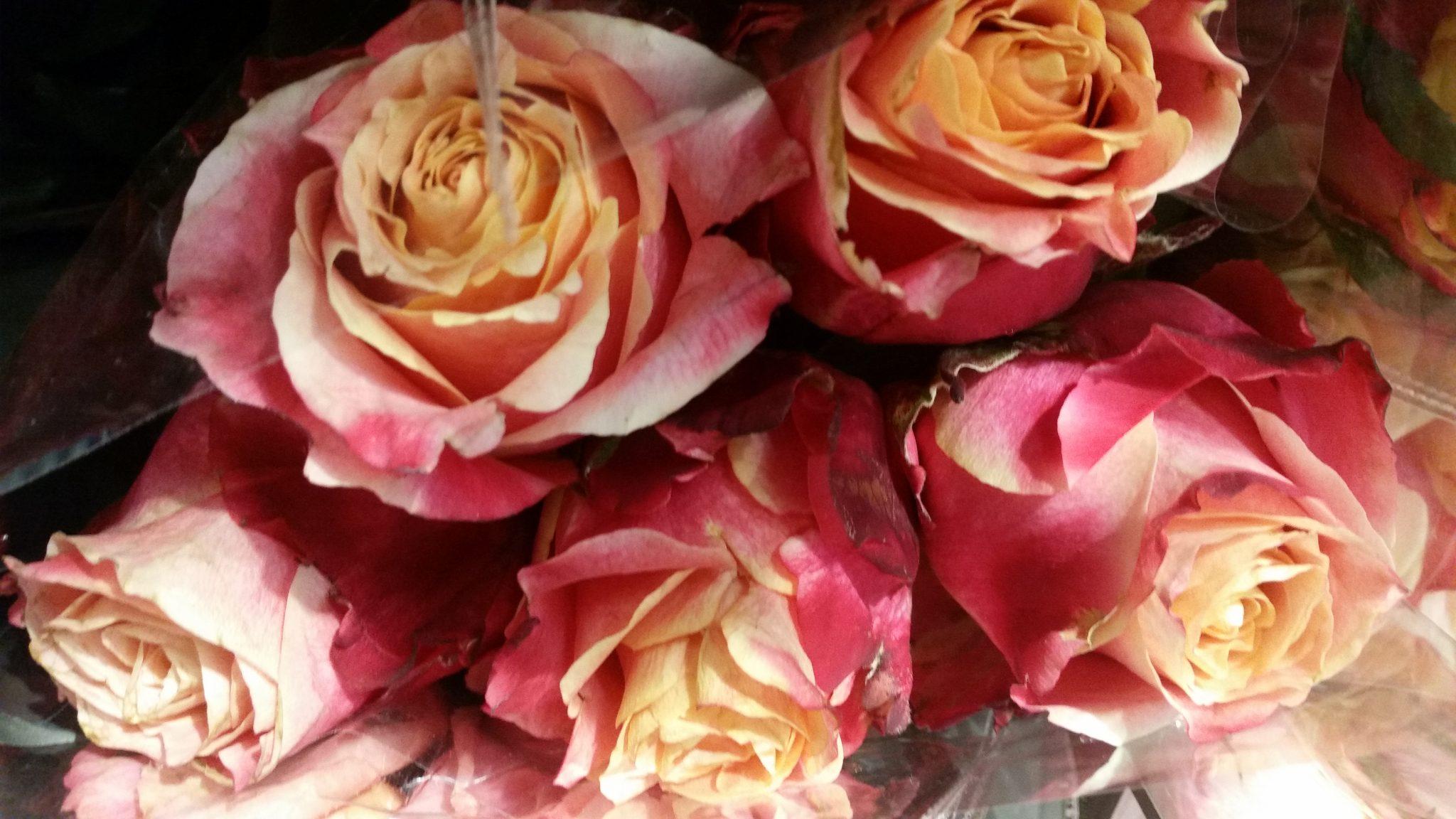 Huile essentielle rose