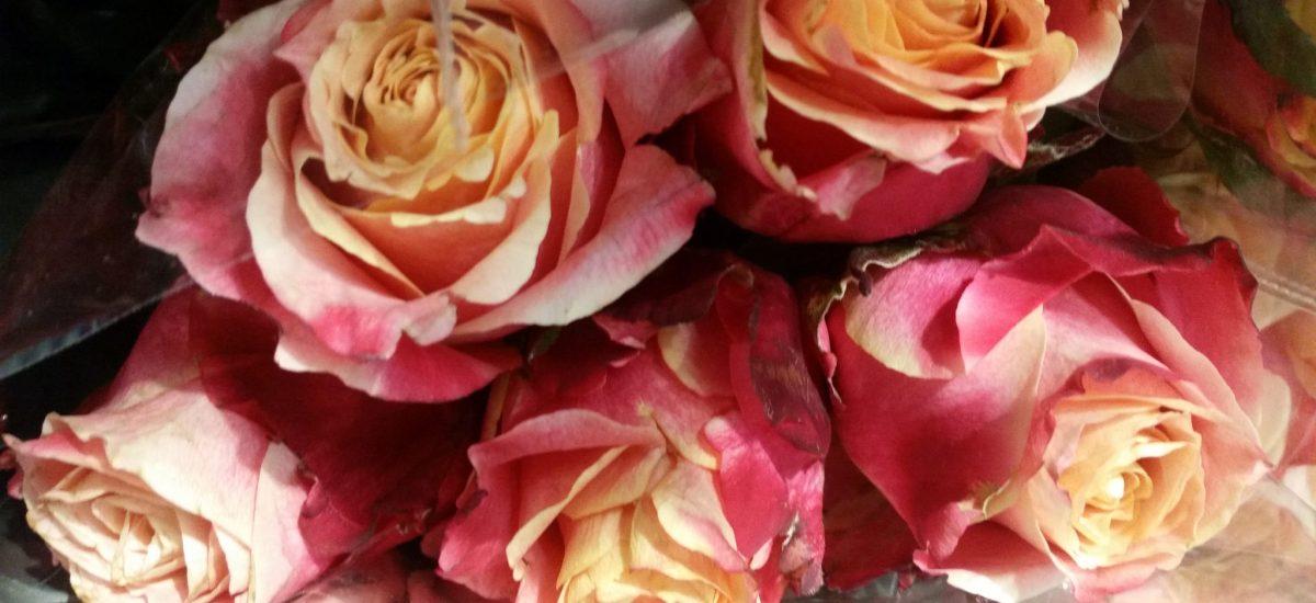 Huile essentielle de rose pour votre beauté