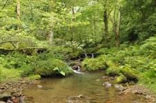 ruisseau-lizarieta