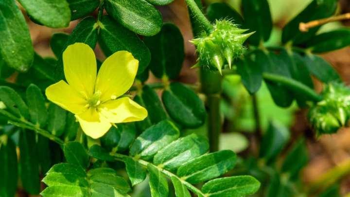 Top 6 des plantes qui boostent la libido