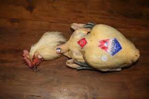 bresse poulet
