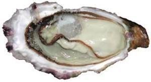 huîtres spéciales pousse en claire