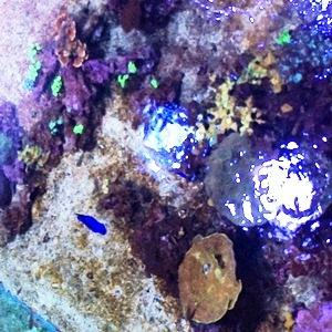 aquarium porte dorée0108