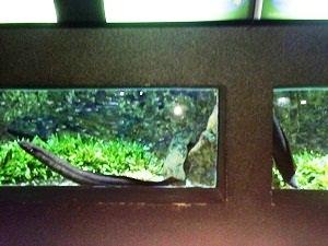 aquarium porte dorée0119