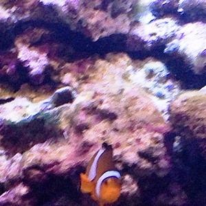 aquarium porte dorée0139