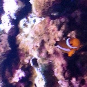 aquarium porte dorée0140