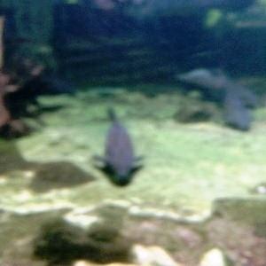 aquarium porte dorée0152