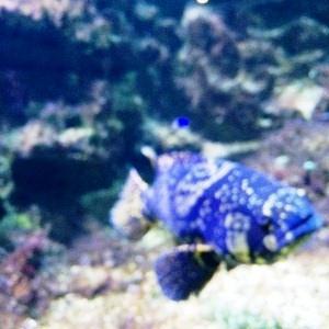 aquarium porte dorée0155