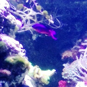 aquarium porte dorée0158