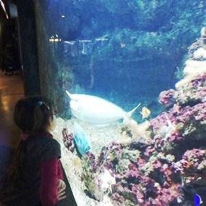 aquarium porte dorée0163