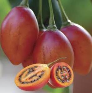 Pepino Melon Arbre 10 Graines 300 g Fruits dégustation comme Melon et Mangue