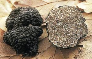 truffe bourgogne