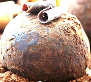 truffe de chambery